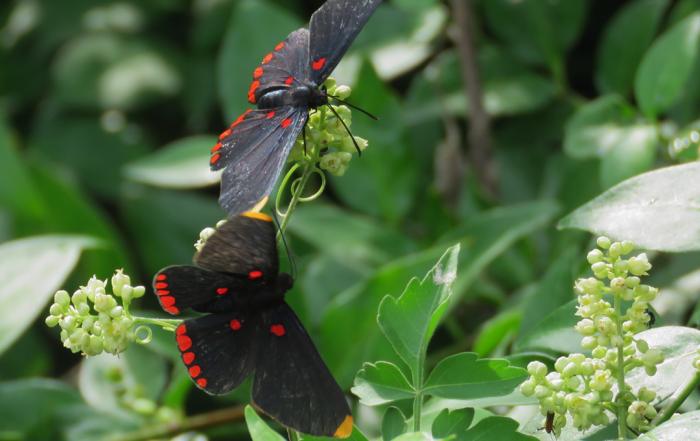 Pollinators in Action IMAS Virtual Exhibit