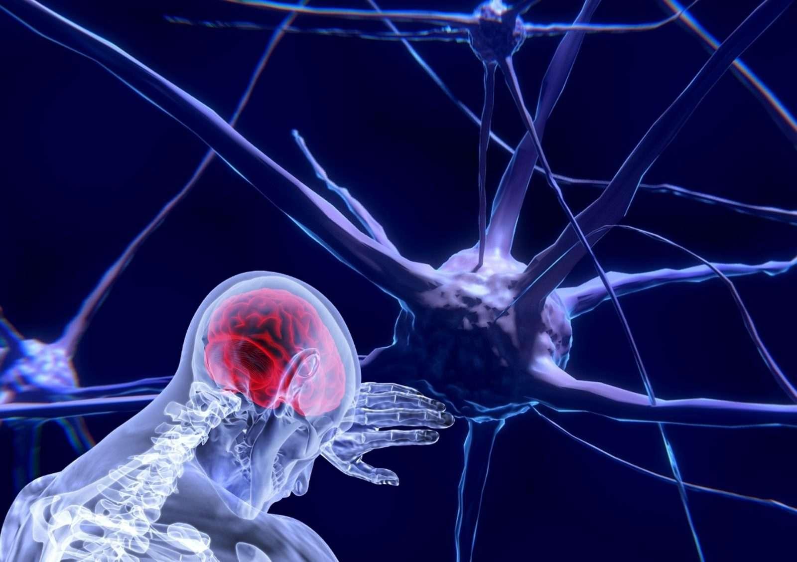 Brain Awareness Hour at IMAS