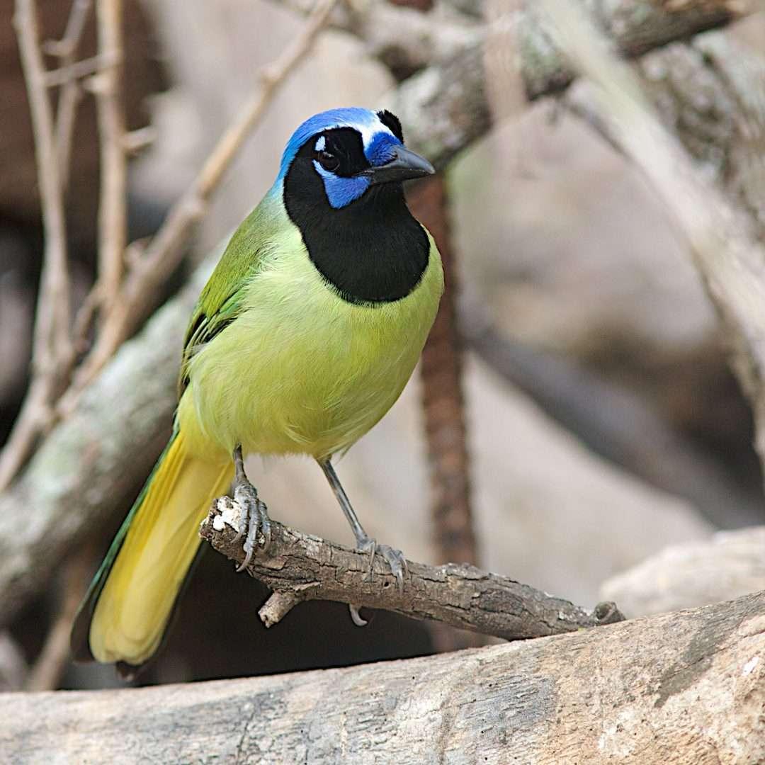 Backyard Bird Log